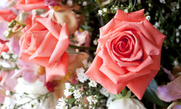 Bunch of pink rose flowers Royalty Free Stock Photography