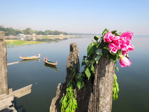 Bunch of pink rose on wooden post at U Bein bridge with boats, l. Bunch of sweet pink rose on wooden post at U Bein wooden teak bridge with boats, lake and clear Stock Photo