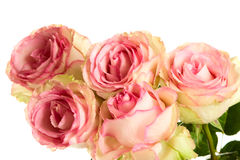 A bunch of pink  roses Royalty Free Stock Photos