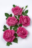 Bunch of pink roses. On white Stock Image