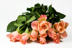 Bunch of pink roses. On white background Stock Photo