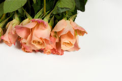 Bunch of pink roses. On white background Stock Image