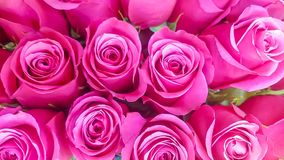 Bunch of pink roses bouquet background. Closeup pink roses background; pink roses has various meanings to include admiration, sympathy, gentleness, affection stock photo
