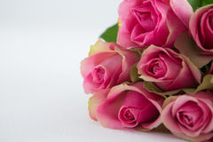 Bunch of pink roses Royalty Free Stock Image
