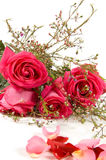 Bunch of pink roses isolated. On white royalty free stock photo