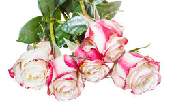 Bunch of pink roses isolated on white Stock Images