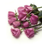 Bunch of pink roses laying on white surface Royalty Free Stock Image