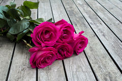 Bunch of pink roses. Royalty Free Stock Photo