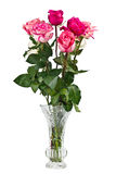Bunch of pink roses in vase Royalty Free Stock Images