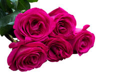 Bunch of pink roses. On white background Stock Photography