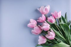 Bunch of pink tulip flowers on blue background. Waiting for spring. Happy Easter card. Flat lay, top view Stock Images