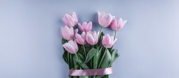 Bunch of pink tulip flowers on blue background. Waiting for spring. Happy Easter card. Stock Image