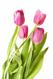 Bunch of pink tulips Stock Photo