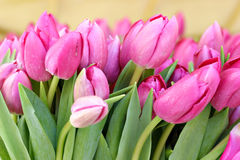 Bunch of pink tulips. On a flower market Royalty Free Stock Images