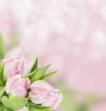 Bunch of pink tulips board on bokeh background Royalty Free Stock Images