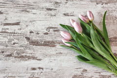 Bunch of pink tulips Royalty Free Stock Photos