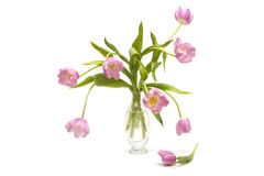 Bunch of pink tulips in a clear vase Royalty Free Stock Photo