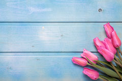 Bunch of pink tulips  flowers on blue wooden background. Stock Images