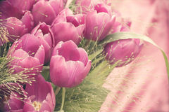 Bunch of pink tulips, vintage style Stock Image