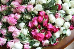 Pink and white roses. Bunch of Pink and white roses on the table Stock Photo