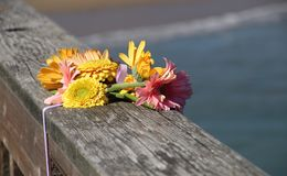 A bouquet of beautiful flowers, in memory. A bunch of pink and yellow shasta daisies is tied to a wooden pier, commemorating the death of a loved one Royalty Free Stock Image