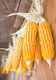 Bunch Of Plastic Corns. Stock Images