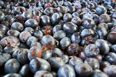A bunch of plums. In a large barrel prepared for making schnapps Stock Photo