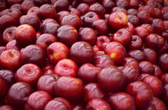 Bunch of plums. Bunch of fresh red plums stock photo