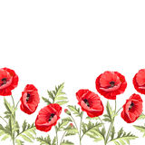 Bunch poppy flowers on a white background. Stock Image