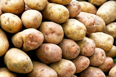 Bunch of potatoes Stock Photography