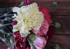 Mixed Carnation Flowers in Full Bloom with Yellow Carnation Close Up stock photo