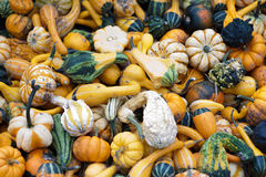 Bunch of pumpkins Royalty Free Stock Image