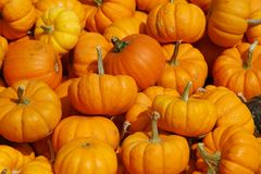 Bunch of Pumpkins. Right before Halloween Royalty Free Stock Photography