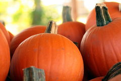 Bunch of Pumpkins Stock Image