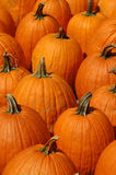 Bunch of Pumpkins. Telephoto compressed vertical view of a group of pumpkins Stock Photos