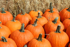Bunch of pumpkins Stock Images