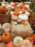 A bunch of pumpkins by halloween royalty free stock image
