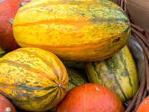 Bunch of pumpkins Royalty Free Stock Photos
