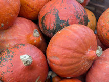 Bunch of pumpkins Stock Photography