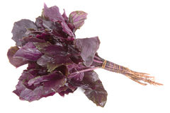 Bunch of purple basil isolated on white background Royalty Free Stock Photography