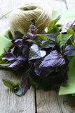 Bunch of purple basil Royalty Free Stock Photos