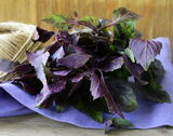 Bunch of purple basil Stock Photo