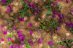 A bunch of purple blossoms. On the floor stock photography