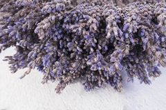 Bunch of purple dried lavender flowers royalty free stock photos