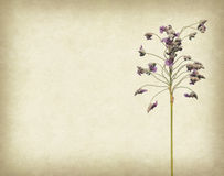 Bunch of purple flower on grunge background Stock Photography