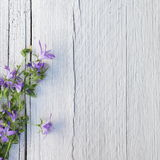 Bunch of purple flowers on white painted wood. Bunch of delicate small purple flowers on white painted wood with cracks and a rough grain texture with copyspace Royalty Free Stock Images
