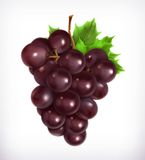 Bunch of purple grapes Royalty Free Stock Image