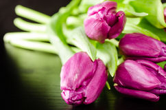 Bunch of purple tulips. On dark wooden background Royalty Free Stock Image