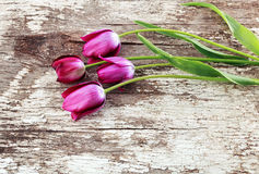 Bunch of purple tulips on old wooden background Stock Photography
