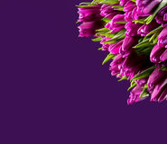 Bunch of purple tulips Stock Photos